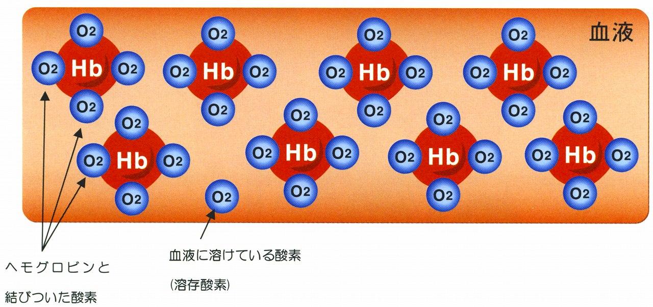 酸素が血液中を運ばれる仕組みを教えて?